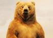 곰 이야기